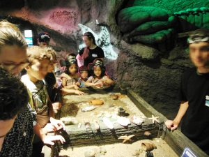 Spannendes entdecken die Kinder und Jugendlichen im Sea Life (Quelle: Kolonjata)